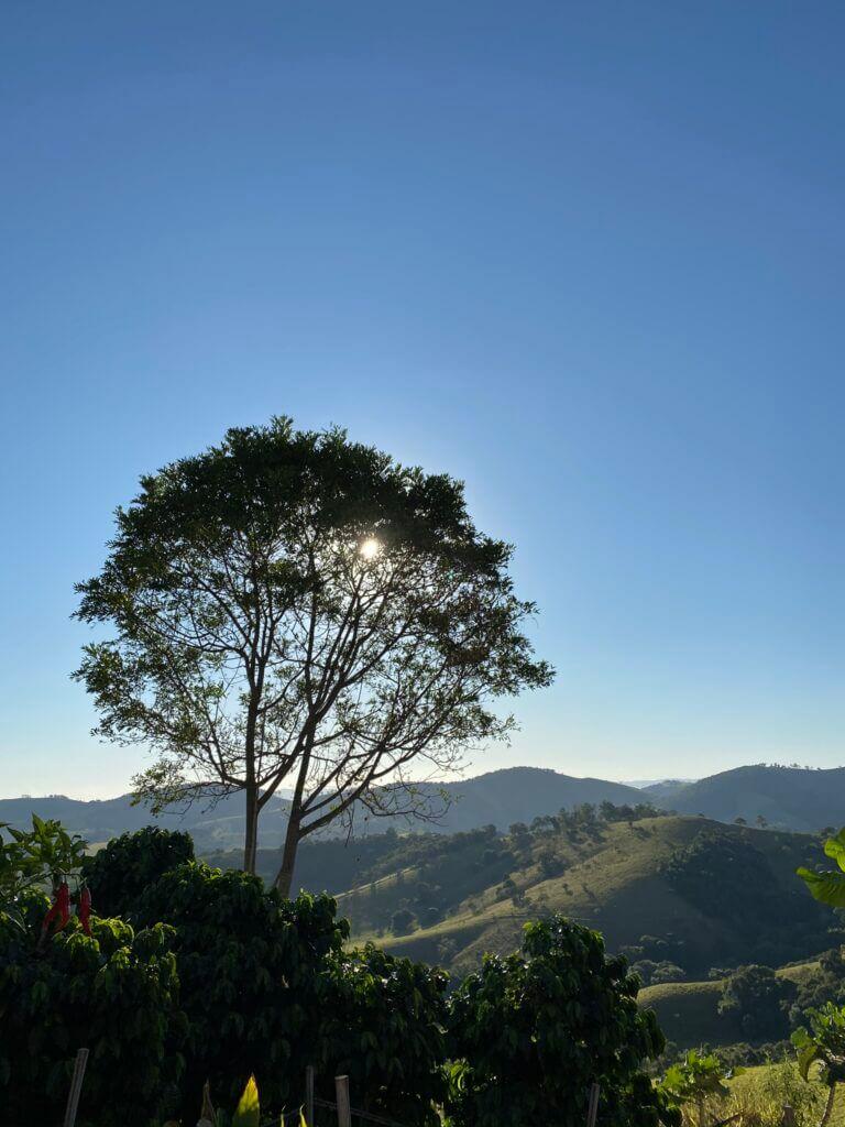 Fotografia da paisagem da Mantiqueira de Minas, árvore frondosa com montanhas ao fundo e um céu limpo todo azul