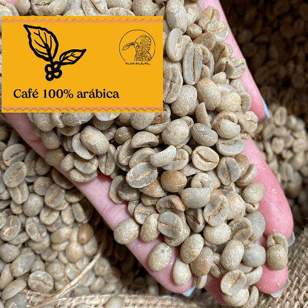 Fotografia de uma mão segurando grãos crus de café 100% arábica da variedade Bourbon Amarelo e Vermelho