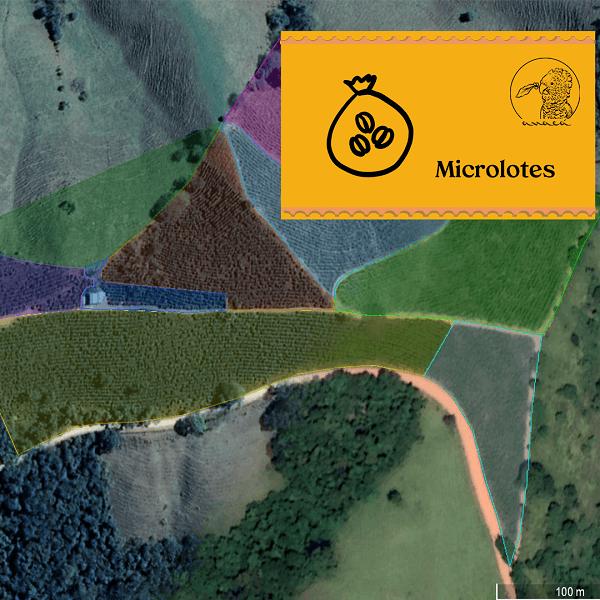 Imagem de satélite do Sítio jacarandá com demarcação colorida dos talhões de café